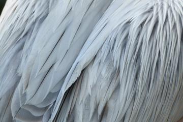 Closeup of pelican plumage Wall mural