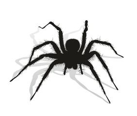 Black spider silhouette.