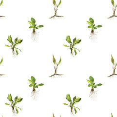 Seamless pattern with watercolor drawing herbs