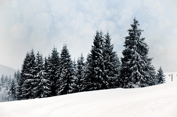 Winter landscape with snowy trees and snowflakes