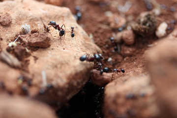 anthill in the hole