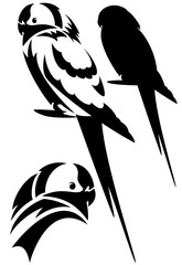 parrot black and white vector design  - bird outline and silhouette set