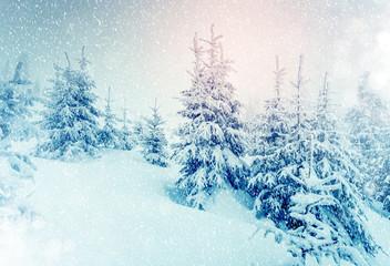 beautiful wintry landscape