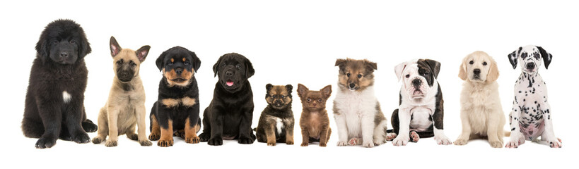 Different Cute Small Dogs