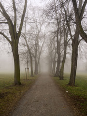 View down a foggy park avenue with bare trees in autumn