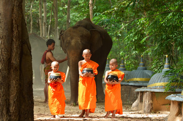 Monk and Elephant  ,Surin Thailand