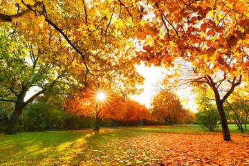 Sonnenstrahlen im herbstlichen Park