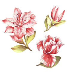 Set with blooming lilies. Hand draw watercolor illustration