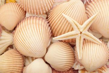 Starfish on seashells background