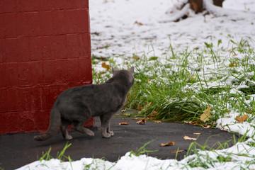 Grey cat on the hunt.