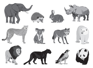 various wild animals on a white background