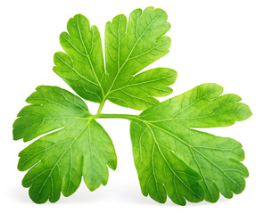 Garden parsley herb (coriander) leaf isolated on white background with clipping path