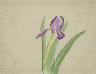 Iris watercolour