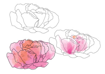 abstract roses flower drawing line art for object or background
