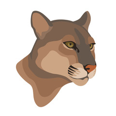 Adult Captive Mountain Lion vector illustration style Flat