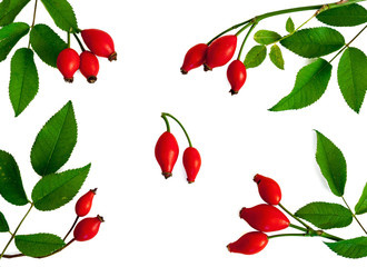 rosehip stems with berries and leaves isolated on a white background