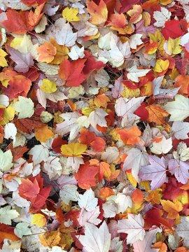 Herbstlaub auf dem Boden