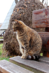 Cat sitting on a wooden bench. Sad pet.