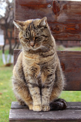 Сat sitting on a wooden bench. Sad pet