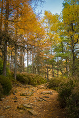 A portrait image of an autumnal forest trail in the Scottish highlands.