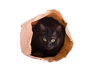 Cat hiding in a brown paper bag, isolated on white