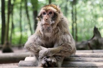 Ritratto di una scimmia seduta in un parco