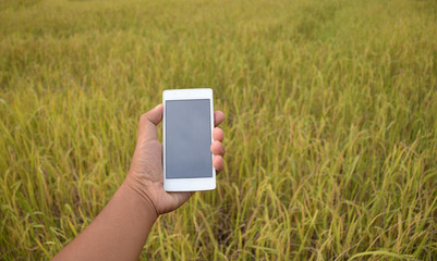 Mobile phone in human hand Background rice fields