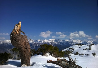 Wall Mural - Tree stump and snow on the Vogel Ski Slopes, Slovenia