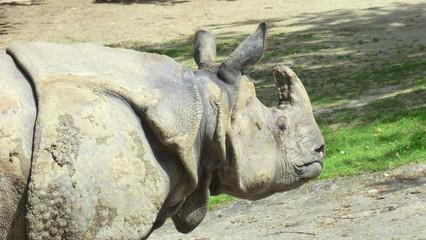 Poster Rhino Neushoorn