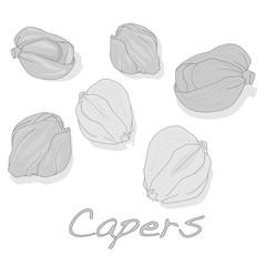 Canned capers vector illustration