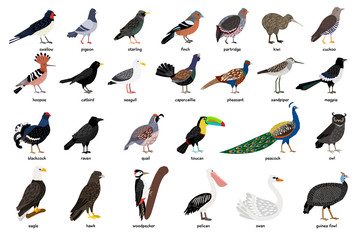 Wonderful set consisting of many birds well known and not so well-known