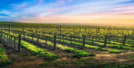 Fototapete - Vineyard Glory