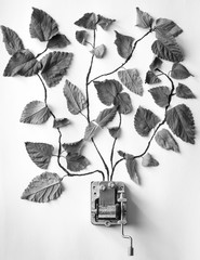 Haiku de hojas