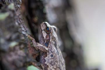 Frog climbing a tree