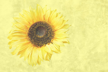 Sunflower on vintage yellow background