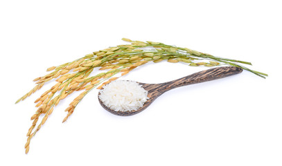 white rice in wooden spoon and unmilled rice isolated on white