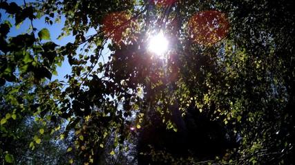 сквозь ветви к солнцу