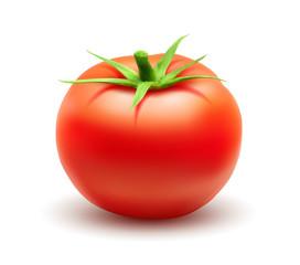 Tomate vectorielle 1