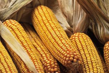 Corn on the cob at food market