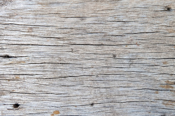 texture of bark wood use as natural background