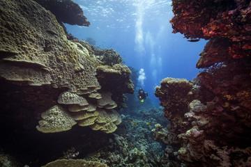 Diver explores the Malahi dive site, Fury Shoals, Red Sea, Egypt