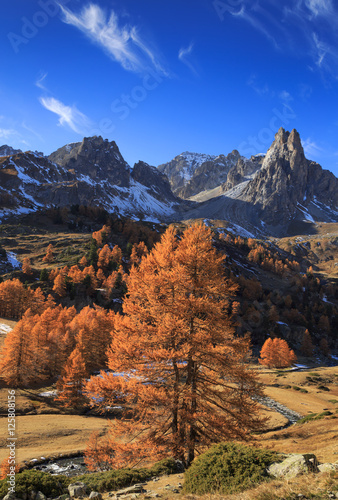 Fotomurales Larch trees in Vallee de la Claree during a clear day in autumn. Nevache, France.