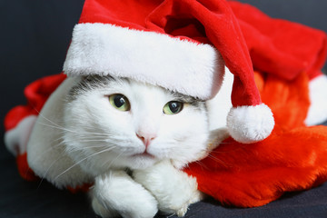 funny cat in christmas new year hat and coat