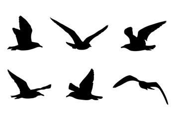 Möwen Silhouetten, Vektorgrafik, Silhouette von sechs Vögeln