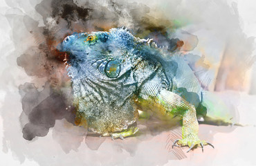 Green iguana. Digital watercolour painting