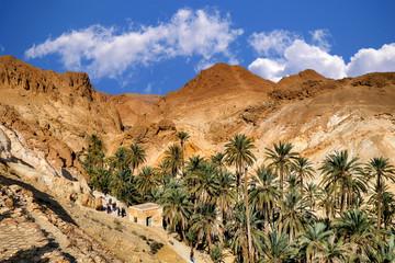 Oase in den Bergen von Chebika, Tunesien
