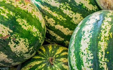 Ripe big water-melons with a green striped skin on a counter of a market closeup view