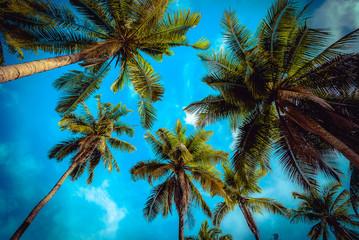 Coconut palm tree on blue sky background. Vintage tone