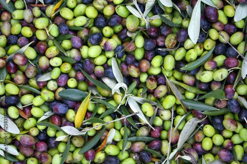 Olive appena raccolte photo libre de droits sur la - Cucinare olive appena raccolte ...
