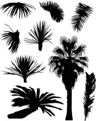 black palm trees and foliage isolated on white